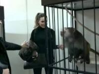 Zazdrosna małpa