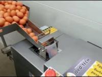Urządzenie do rozdzielania żółtka od białka