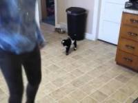 Mała koza powtarza skoki po dziecku. !! Hit