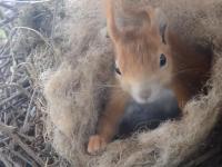 Mały wiewiórczy cud za oknem