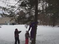 Drzewa vs ludzi