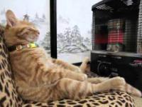 Kot odpoczywa przy promienniku.