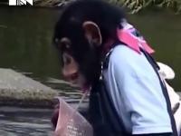 Małpka próbuje uratować psa