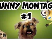 Best Montage 1: Funny moments