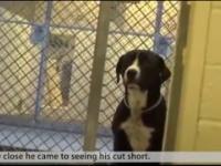Wielka radość psa który uświadamia sobie, że wreszcie zostaje adoptowany