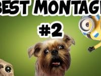 Best Montage 2 : Funny Moments
