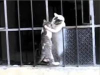 Kocia mama pomaga młodemu kotkowi wejść przez okno