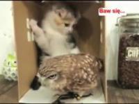 Baw się... kotek i sowa