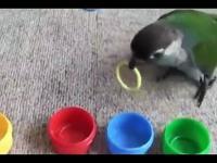 Bardzo mądra Papuga