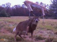 Dziwne zdjęcia zwierząt z leśny kamerek