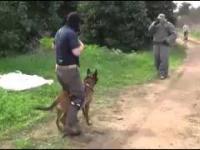 Wyszkolenie psów w Izraelskich jednostkach antyterrorystycznych