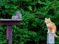 Nigdy nie odwracaj się od wiewiórki