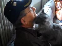 Koty witają swoich właścicieli po bardzo długim czasie rozłąki