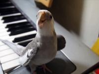 Urocza nimfa śpiewa piosenkę z filmu: