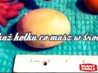 Ale jajca! Kura zniosła wielkie jajko co jest w środku?