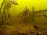Tak wygląda łowienie ryb pod lodem