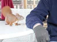Ta wiewiórka zachwyca. Zauroczyła mnóstwo internautów
