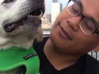 Mężczyzna zabrał śmiertelnie chorego psa w podróż po Stanach Zjednoczonych
