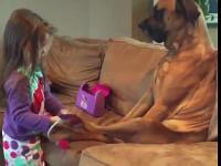 Cierpliwy pies kontra mała dziewczynka