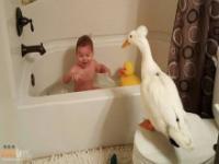 Chłopiec przyjaźniący się z kaczką