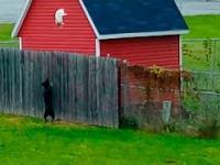Kozacka ucieczka kota przed psem