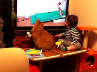 Kot razem z dzieckiem, ogląda materiał wideo na telewizorze...