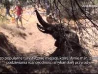 Młody słoń utknał w wyschniętej studni