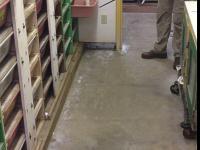 Zwykły nudny dzień w pracy przy dokarmianiu węży