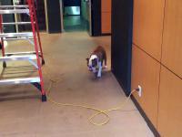 Irracjonalny strach psa i jego sposób na poradzenie sobie z tym...