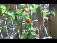 Hodowla owoców egzotycznych w warunkach domowych.