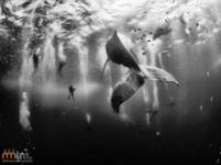 Wieloryby na zdjęciach