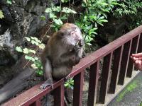 Zachłanna małpa
