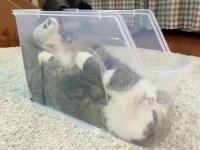 Kot, który relaksuje się w plastikowym pudełku