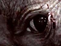 Filmy dokumentalne, które zniszczą Waszą wiarę w ludzkość!
