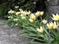 Wiosna, cieplejszy wieje wiatr...