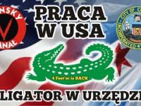 Praca w USA - Aligator w urzędzie!