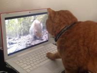 Zwierzęta vs nowoczesne technologie