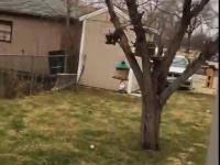 Wiewiórka ninja