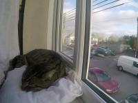 Krótkie poklatkowe wideo śpiącego kota na oknie