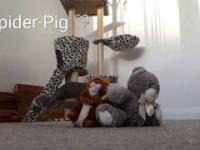zabawna wiewiórka szuka orzeszka