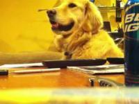 Pies który kocha gitarę
