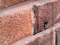 Duża siła drzemiąca w malutkim owadzie