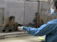 Małpa nie jest zadowolona z wynagrodzenia za swoje zadanie