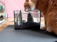 Akwarium... jak zapobiec szybkiemu parowaniu wody? :P