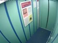 Piesek w windzie