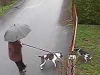 Krótka rozmowa dwóch psów, aż nagle...
