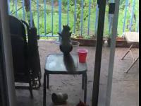 Wiewiór drwi z kota