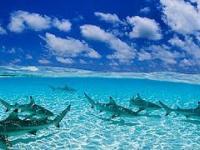 Mąż zmusza żonę do pływania z rekinami.