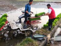 Maszyna do sadzenia ryżu