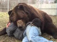 Niedźwiedź - najlepszy przyjaciel